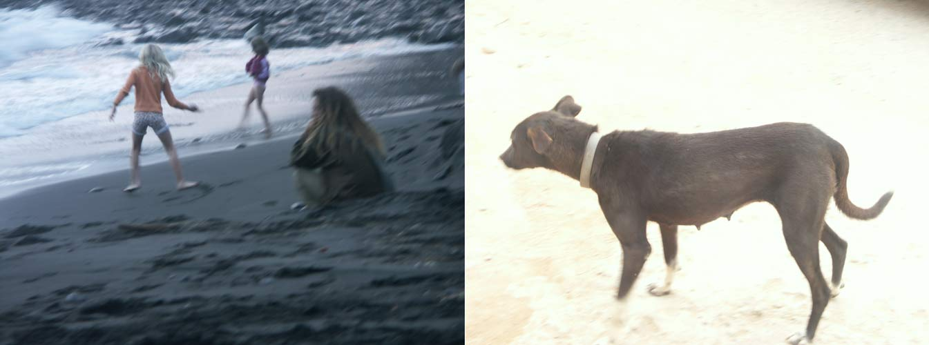 Gomera-Strand-Hund